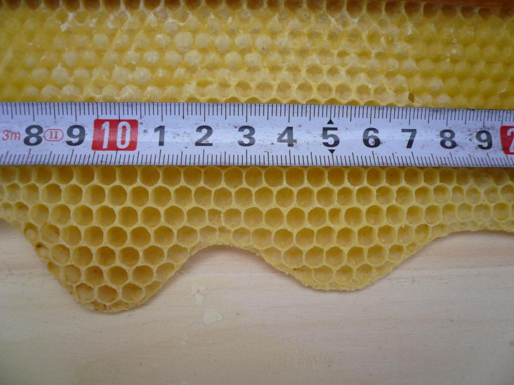 Węza i komórka pszczela 4,9 mm